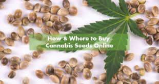 Buying Marijuana Seeds Online